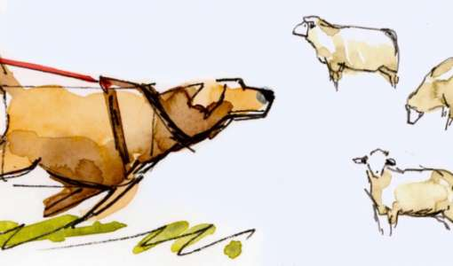 Tiere sketchen! - Kompaktworkshop